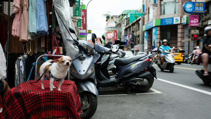 dog-eating-is-the-old-tradition-of-vietnam